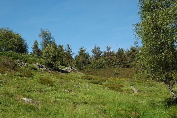Végétation autour de l'étang de Barrandon