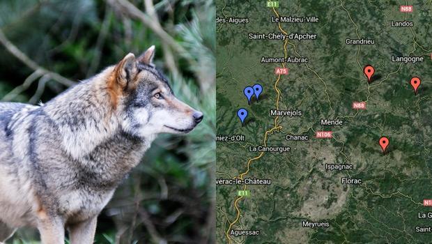 Carte du loup en Lozère 2013
