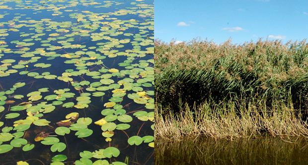 Végétation lac des Salhiens